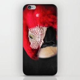 scarlet macaw - ara macao iPhone Skin