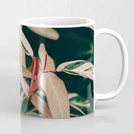 Stromanthe Triostar Coffee Mug