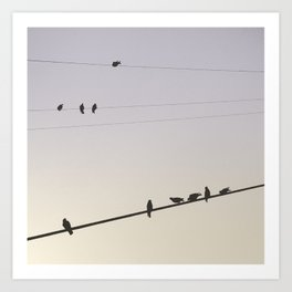 For the birds. Art Print