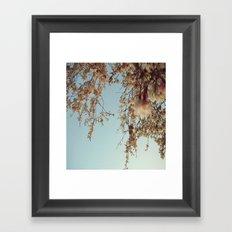 Cherry Blossoms 2 Framed Art Print