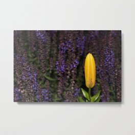 Unbloomed Lily Metal Print