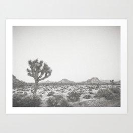 JOSHUA TREE VII Art Print