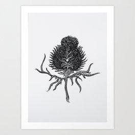 Onopurdum Acanthium Art Print