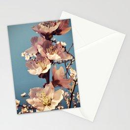 fulgor Stationery Cards