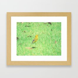 Yellow canary in grass Framed Art Print
