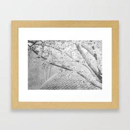 Early Spring Blossoms Framed Art Print