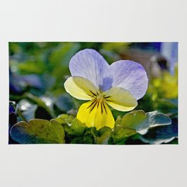 Pansy Perfection Rug