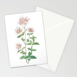 Oregano flower Stationery Cards