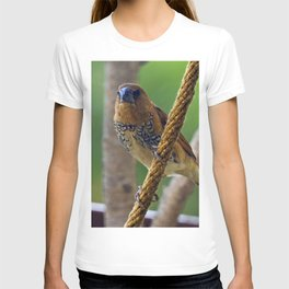 Nutmeg Mannikin T-shirt