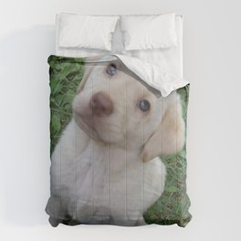 Cutie Pie yellow Lab puppy Comforters