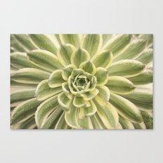 succulent 09 Canvas Print