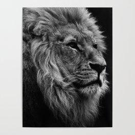 Black Print Lion Poster