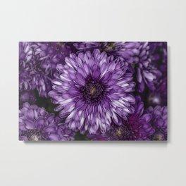 Purple Mums Metal Print