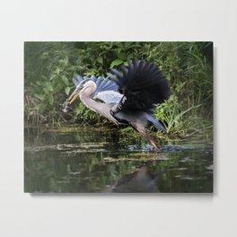 Heron Take-off Metal Print