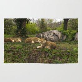 Lionesses Rug