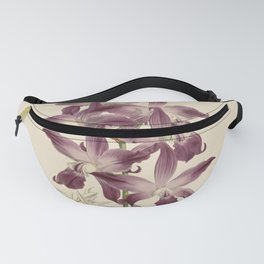 R. Warner & B.S. Williams - The Orchid Album - vol 01 - plate 049 Fanny Pack