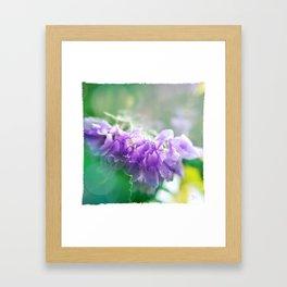 Lavender Light Framed Art Print
