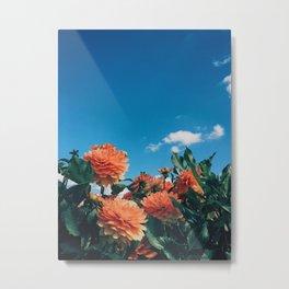 Swan Island Dahlia Metal Print