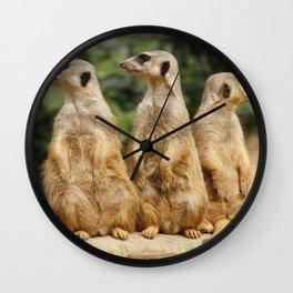 Meerkat20151201 Wall Clock