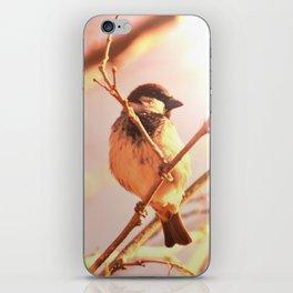 Morning sparrow iPhone Skin