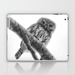 Pearl-Spotted Owlet Laptop & iPad Skin
