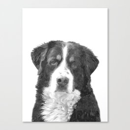 Black and White Bernese Mountain Dog Canvas Print