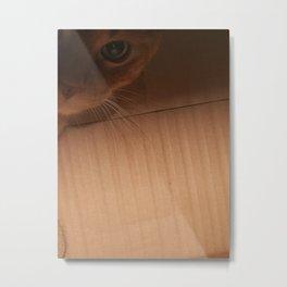 Cat box Metal Print