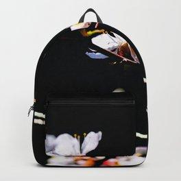 Impressive, Elegant Japanese Apricot Flowers Against The Black Background Backpack