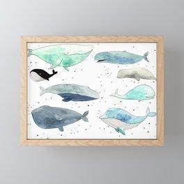 Blue whales Framed Mini Art Print