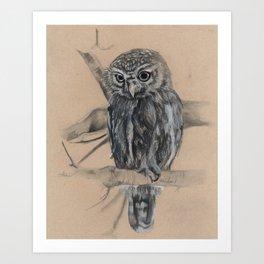Caellum's Owlet Art Print