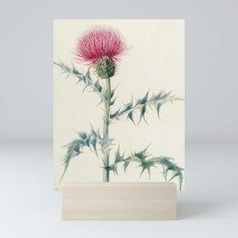 Thistle Vintage Botanical Print, Mary Vaux Walcott Mini Art Print