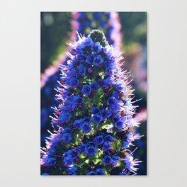 Coastal Purple Flowers Canvas Print