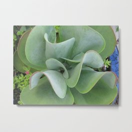 Friendly Paddle Plant Metal Print
