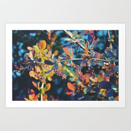 Golden Hour Shrub Art Print