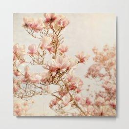 Magnolias, No. 14z Metal Print