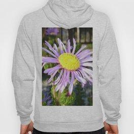 Close Up of A Violet Aster Flower Spring Bloom  Hoody