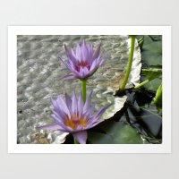 Purple waterlilies Art Print