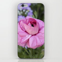 Ranunculus with water drops iPhone Skin