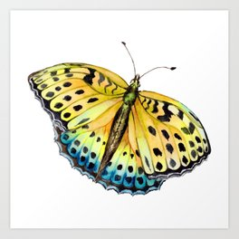 Insect butterfly insect admiral gift Art Print