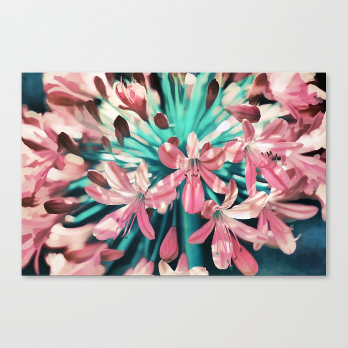 Sunny Agapanthus Flower in Pink & Teal Canvas Print