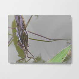 waterbug Metal Print