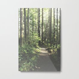 Old Forest Path Metal Print