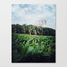 standing above Canvas Print