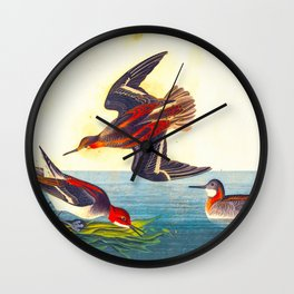 Hyperborean Phalarope Bird Wall Clock