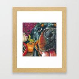 black Rottweiler dog and HarvestPumpkin Color Pencil art print Framed Art Print