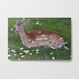 Sweet Eyes Metal Print