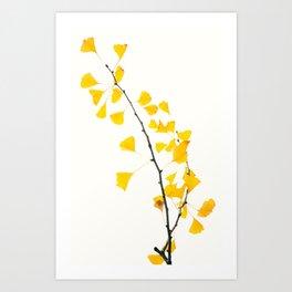 gingko biloba branch Art Print
