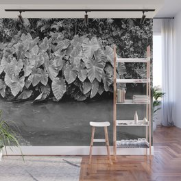 Taro plants Wall Mural