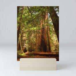 Muir Woods Walkway Mini Art Print
