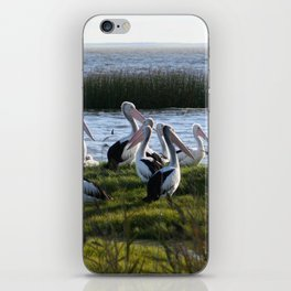 Pelicans iPhone Skin